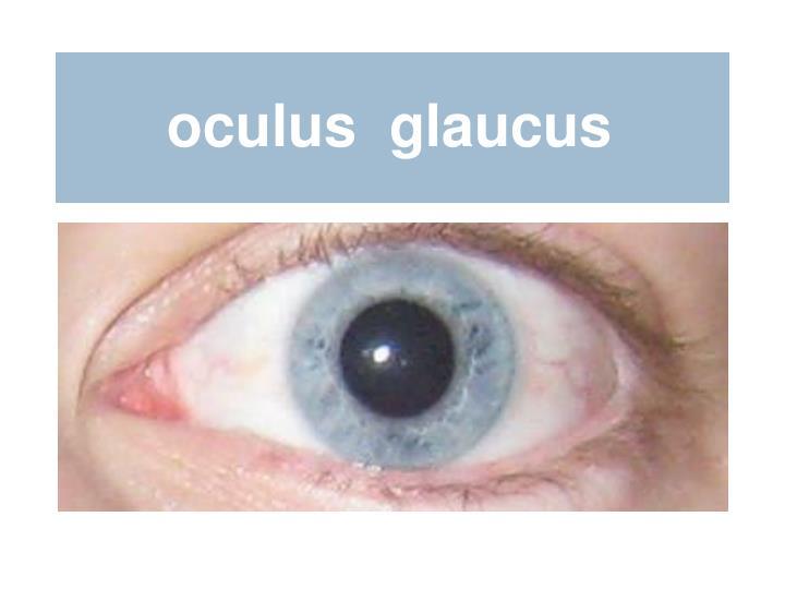 oculus  glaucus