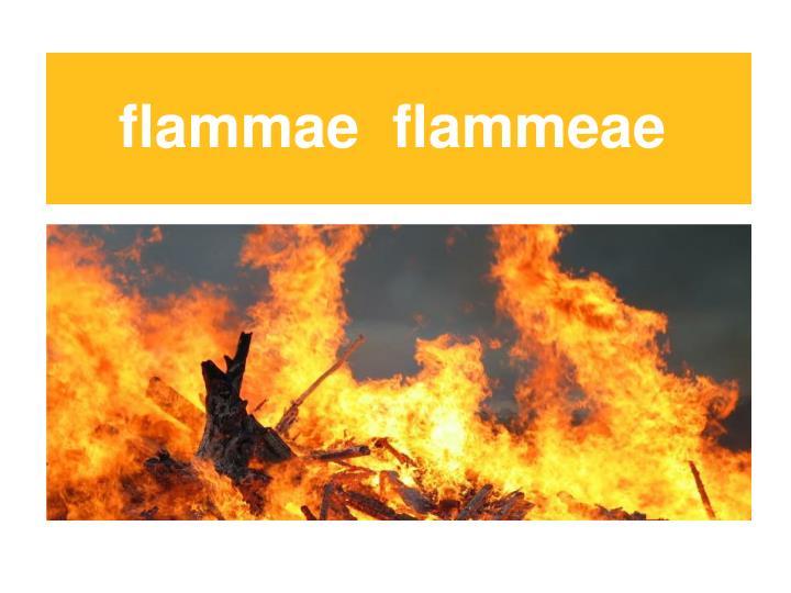 flammae  flammeae