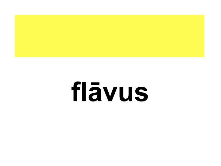 flāvus