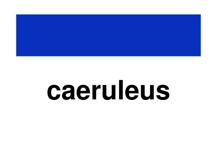 caeruleus