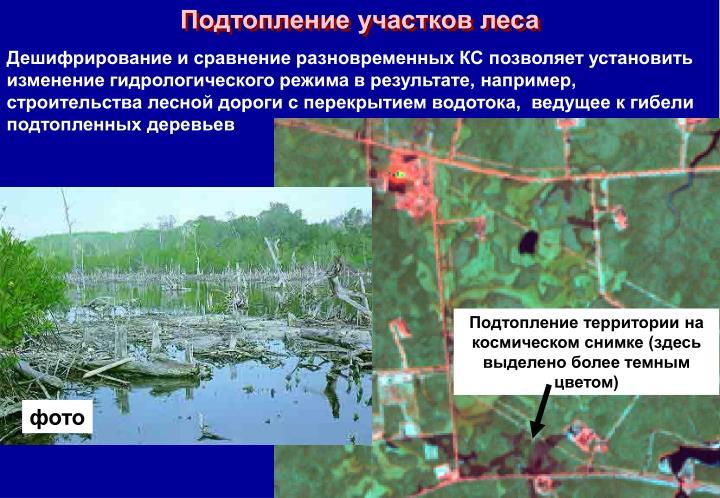 Подтопление участков леса