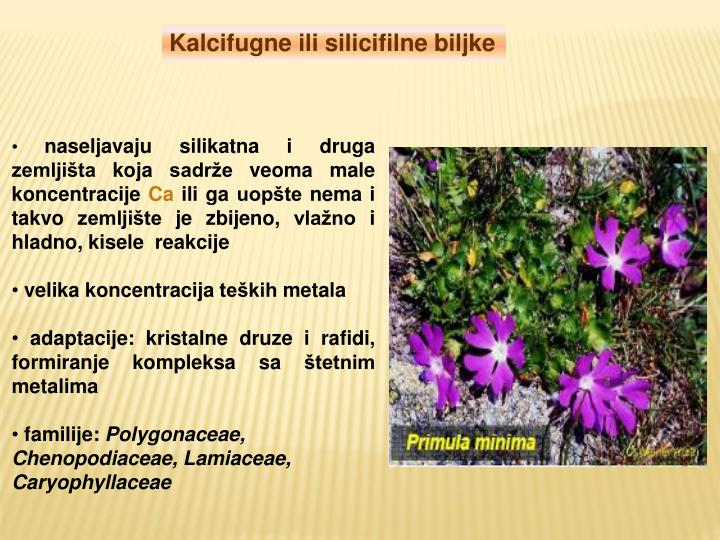 Kalcifugne ili silicifilne biljke