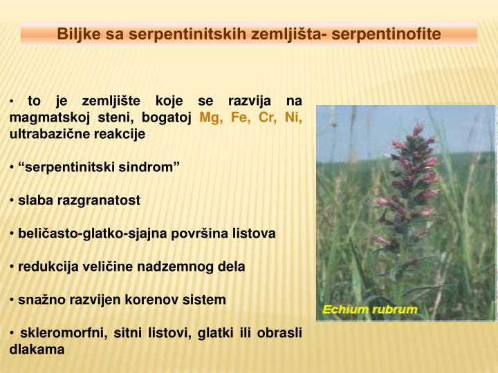 Biljke sa serpentinitskih zemljišta- serpentinofite