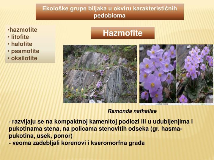 Ekološke grupe biljaka u okviru karakterističnih