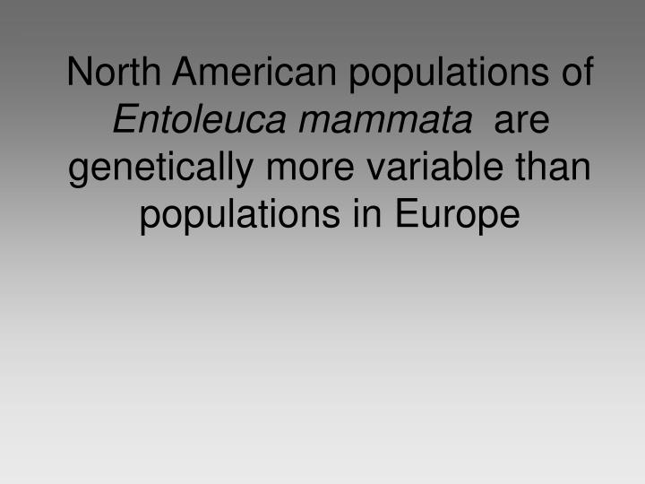 North American populations of