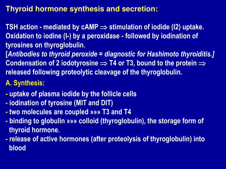 Thyroid hormone synthesis and secretion: