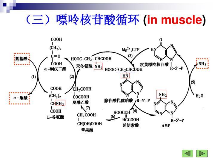 (三)嘌呤核苷酸循环
