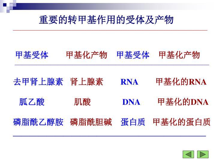 重要的转甲基作用的受体及产物