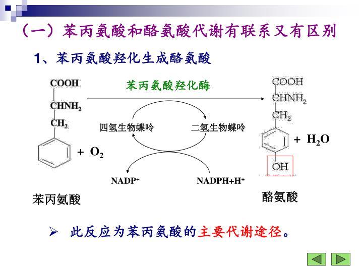 苯丙氨酸羟化酶