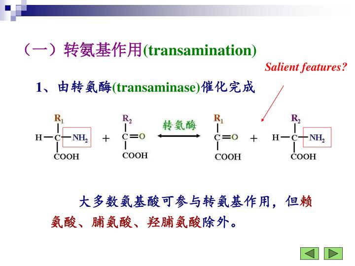 (一)转氨基作用