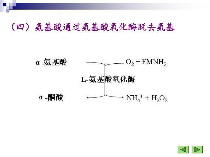 (四)氨基酸通过氨基酸氧化酶脱去氨基