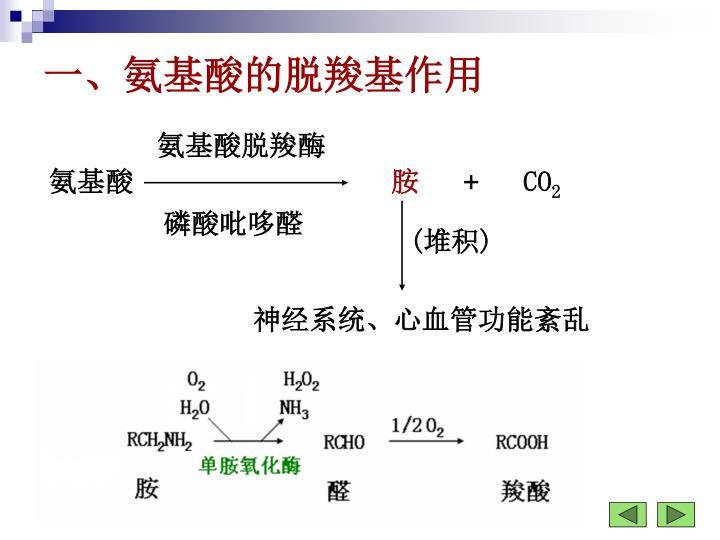 一、氨基酸的脱羧基作用