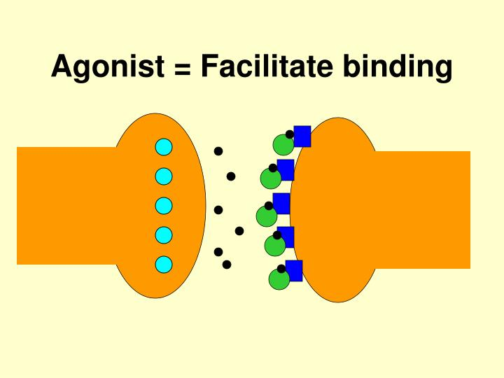 Agonist = Facilitate binding