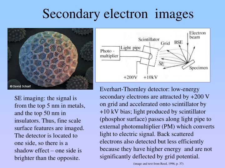 Secondary electron  images