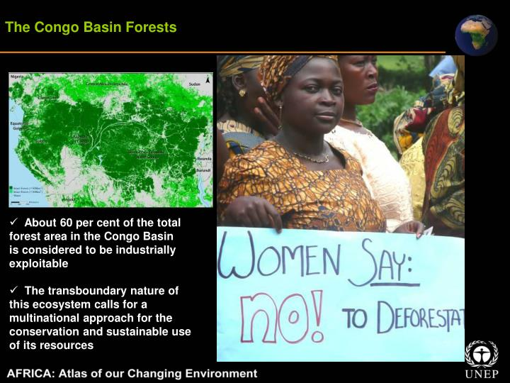 The Congo Basin Forests