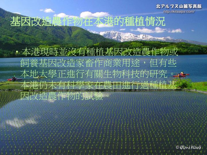 基因改造農作物在本港的種植情況