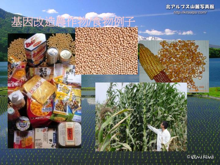 基因改造農作物