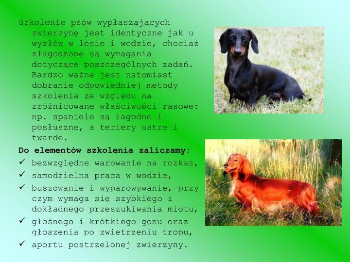 Szkolenie psów wypłaszających zwierzynę jest identyczne jak u wyżłów w lesie i wodzie, chociaż złagodzone są wymagania dotyczące poszczególnych zadań. Bardzo ważne jest natomiast dobranie odpowiedniej metody szkolenia ze względu na zróżnicowane właściwości rasowe: np. spaniele są łagodne i posłuszne, a teriery ostre i twarde.
