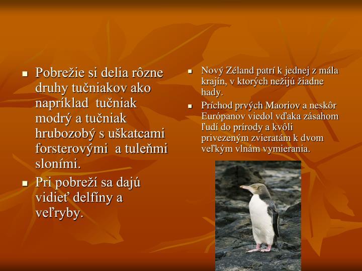 Pobrežie si delia rôzne druhy tučniakov ako napríklad  tučniak modrý a tučniak