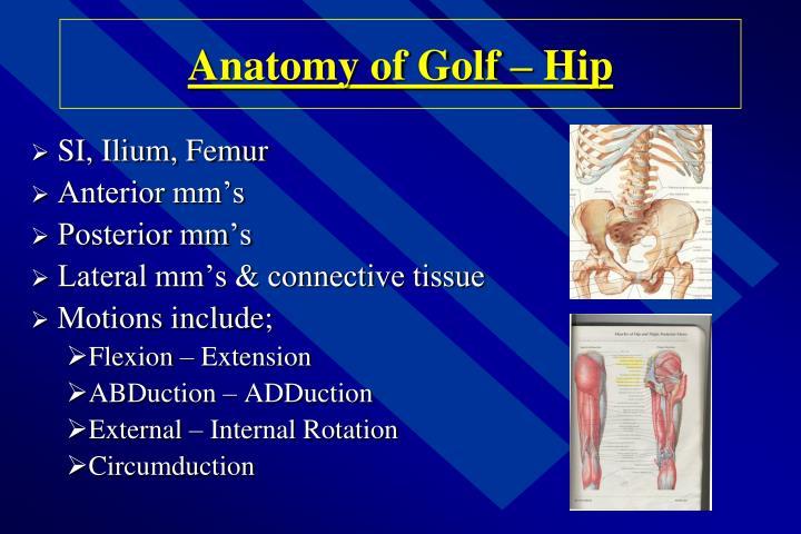 Anatomy of Golf – Hip
