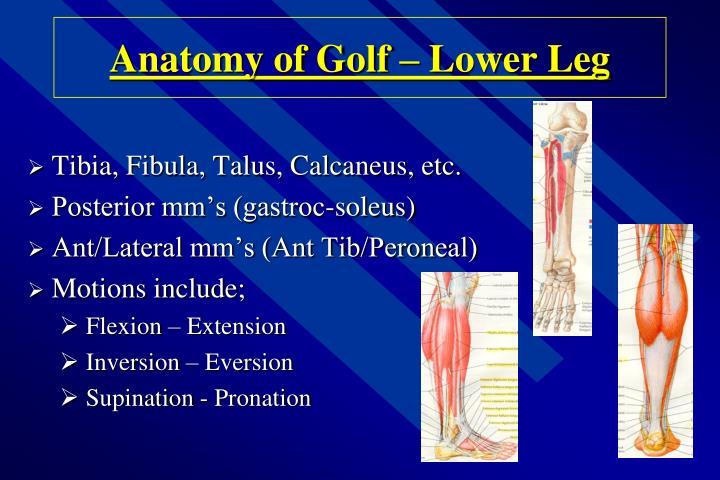 Anatomy of Golf – Lower Leg