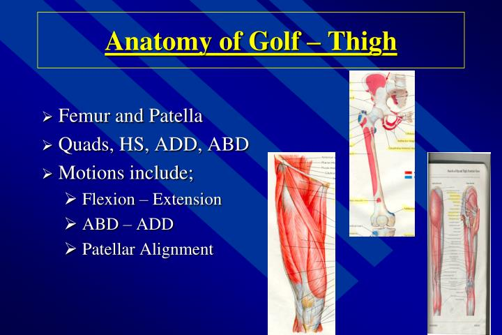 Anatomy of Golf – Thigh