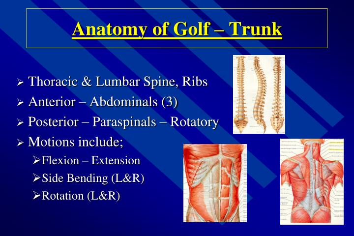 Anatomy of Golf – Trunk