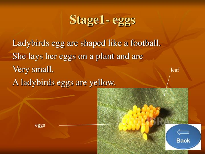 Stage1- eggs