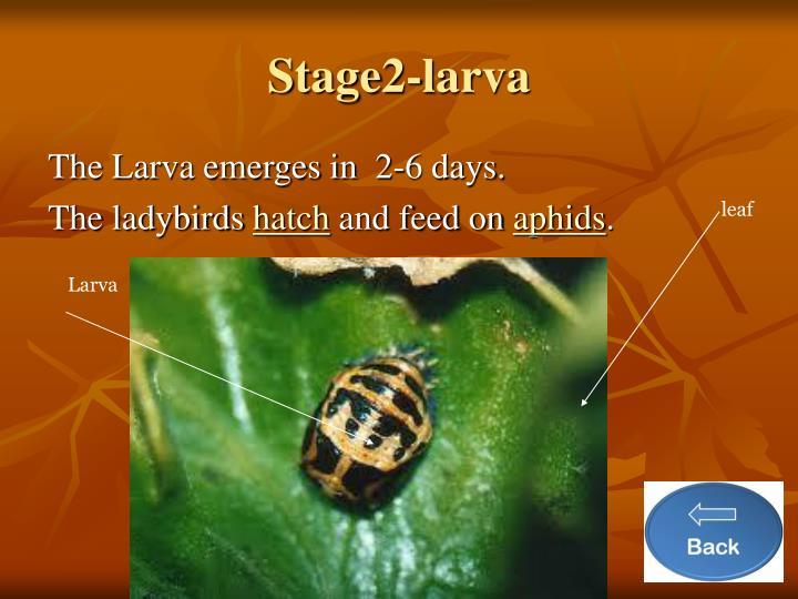 Stage2-larva