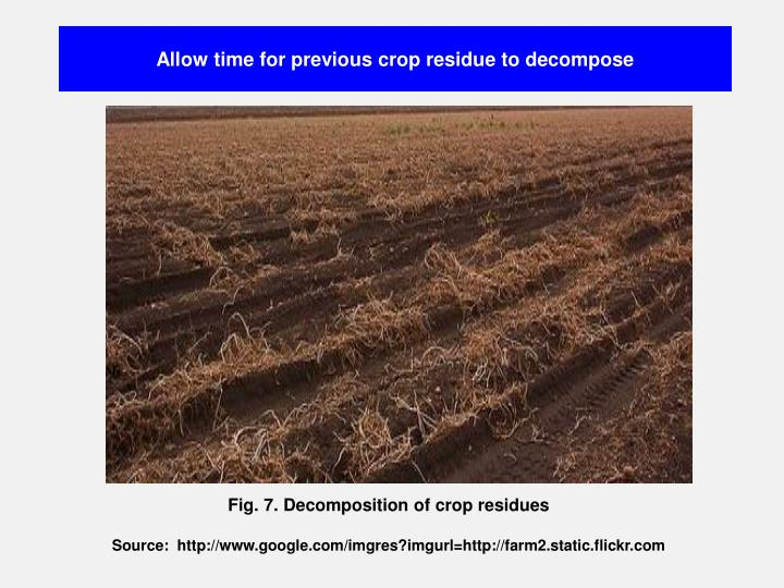 Allow time for previous crop residue to decompose