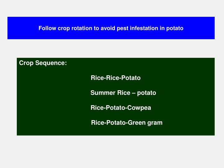 Follow crop rotation to avoid pest infestation in potato