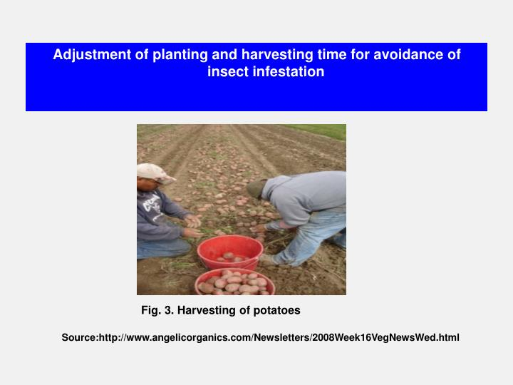 Adjustment of planting and harvesting time for avoidance of insect infestation
