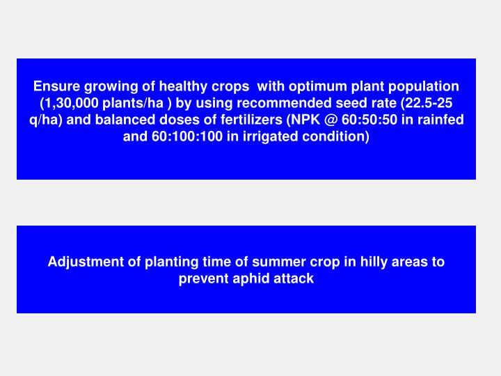 Ensure growing of healthy crops  with optimum plant population (1,30,000 plants/ha ) by using recommended seed rate (22.5-25 q/ha) and balanced doses of fertilizers (NPK @ 60:50:50 in rainfed and 60:100:100 in irrigated condition)