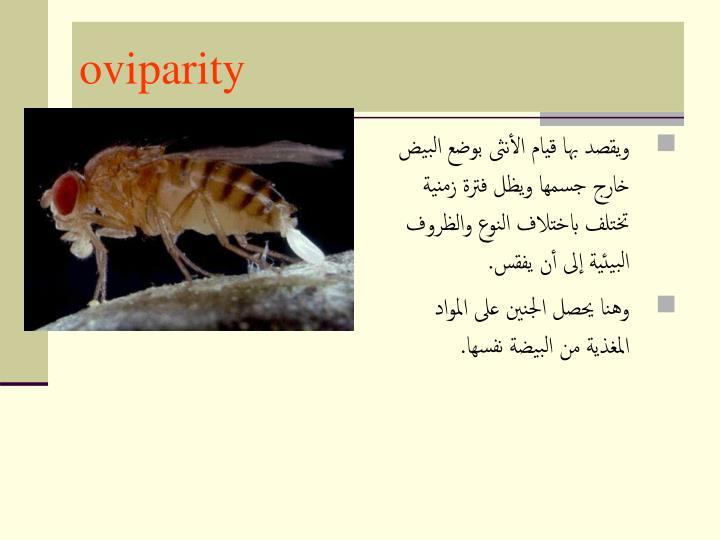 oviparity
