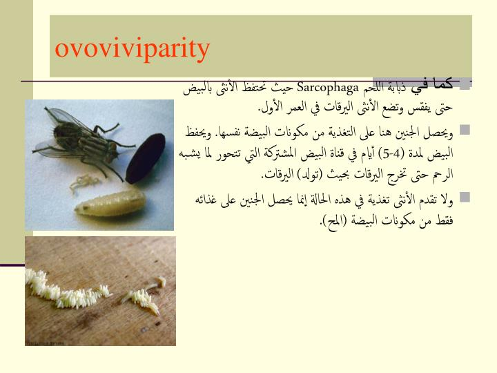 ovoviviparity