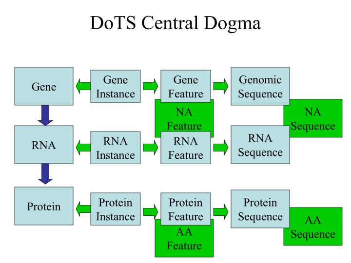 DoTS Central Dogma