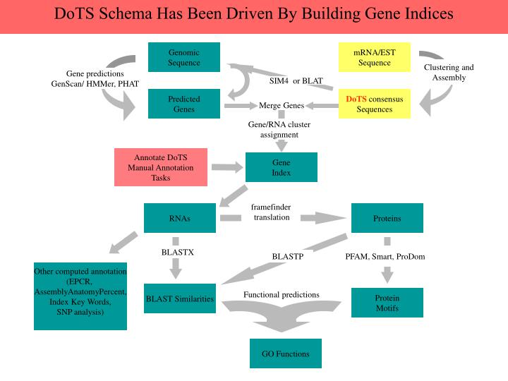DoTS Schema Has Been Driven By Building Gene Indices