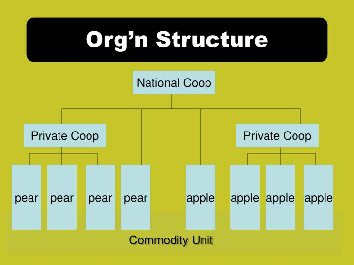 Org'n Structure