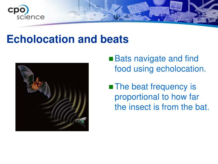 Echolocation and beats