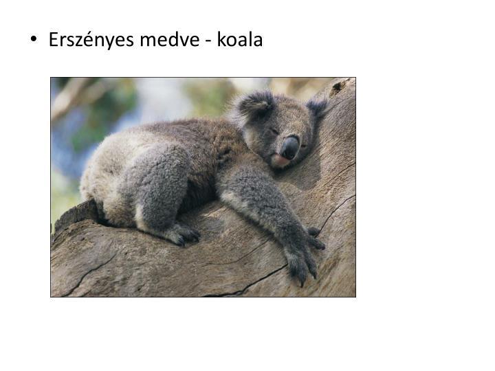 Erszényes medve - koala