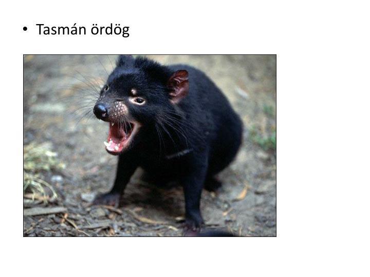Tasmán