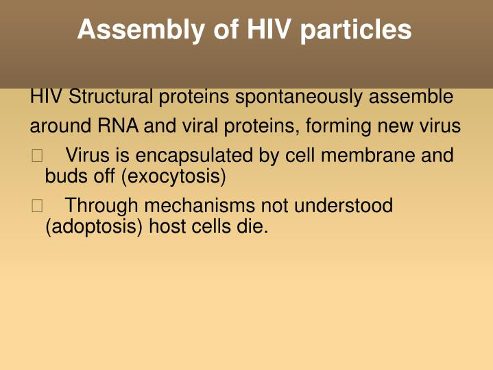 Assembly of HIV particles
