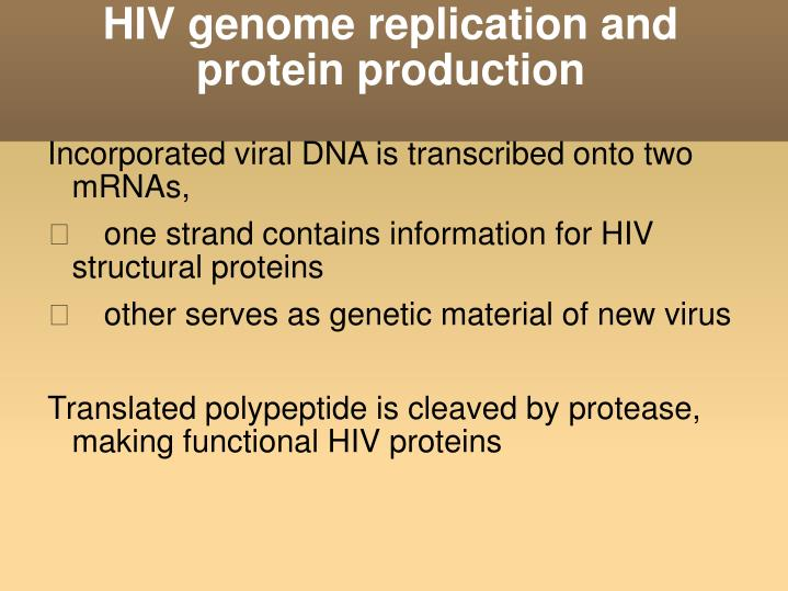 HIV genome replication and protein production