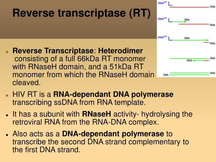 Reverse transcriptase (RT)