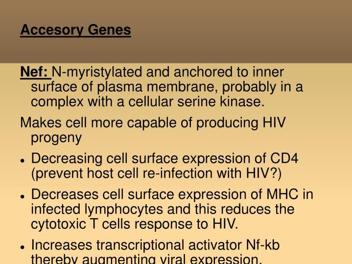 Accesory Genes