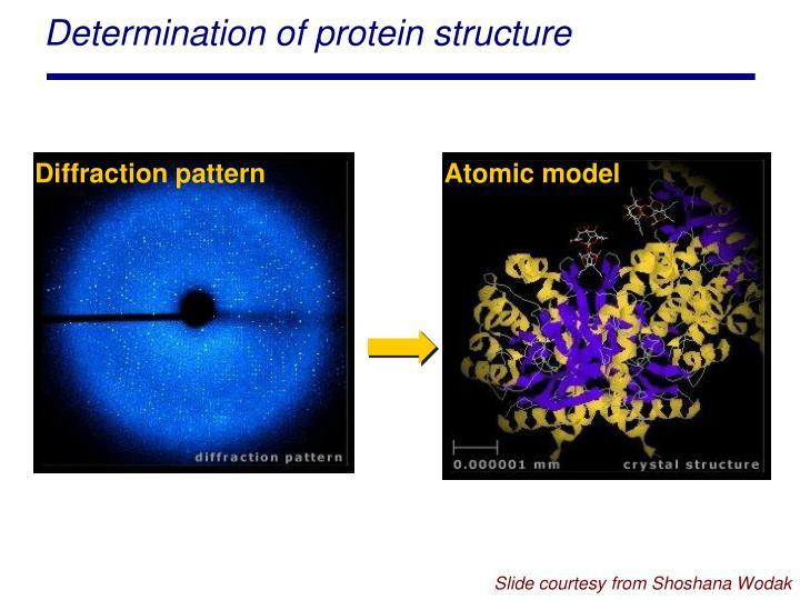 Determination of protein structure