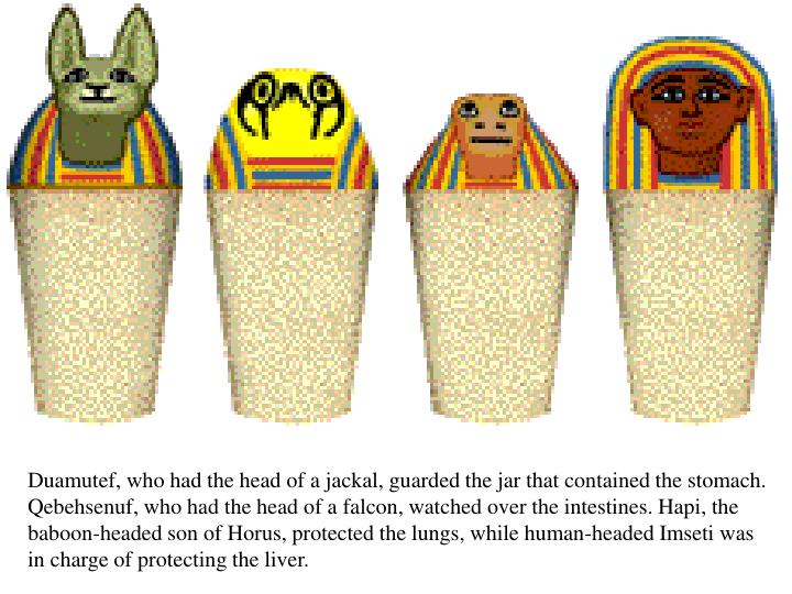 Duamutef, who had the head of a jackal, guarded the jar that contained the stomach. Qebehsenuf, who had the head of a falcon, watched over the intestines. Hapi, the baboon-headed son of Horus, protected the lungs, while human-headed Imseti was in charge of protecting the liver.