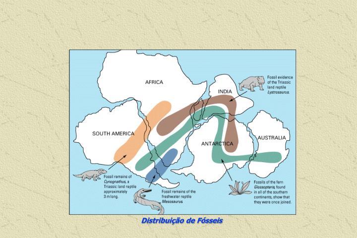 Distribuição de Fósseis