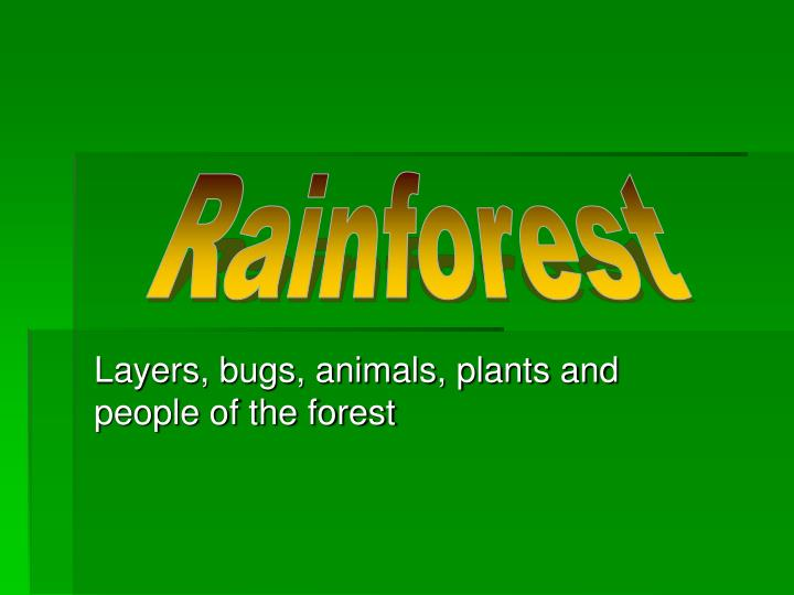 Layers bugs animals plants and people of the forest