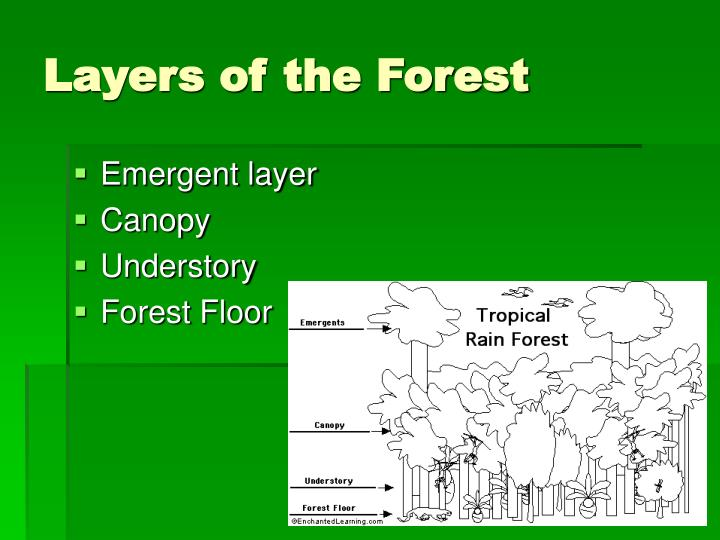 Layers of the forest